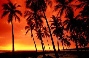 Bible translations into Hawaiian - Wikipedia |Pidgin Bible