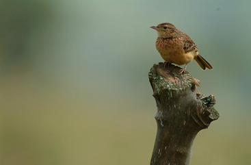 birds uganda